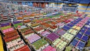 Оптовый рынок цветов